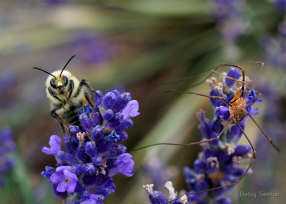 Bumble Bee and a Daddy Long-Leg by Betsy  Seeton