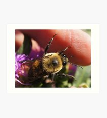 One of my Bumble bees Art Print