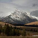 Yellowstone Beauty by Charlene Aycock