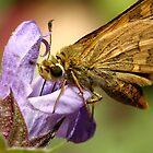 Rider of the Purple Sage by burnettbirder