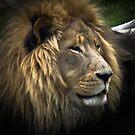 The King by David  Preston