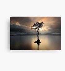 Lone tree on Loch Lomond Metal Print