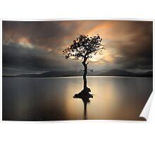 Lone tree on Loch Lomond Poster