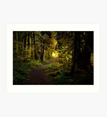 Stay On The Trail Art Print