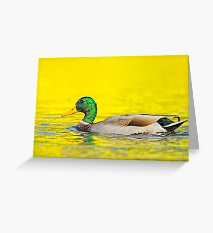 Fall Mallard Greeting Card