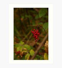 Wild Berries in Forest Art Print