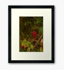 Wild Berries in Forest Framed Print