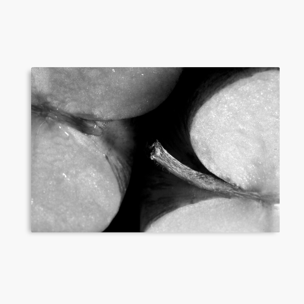 Applethorpe (STRONG SEXUAL METAPHOR) Canvas Print