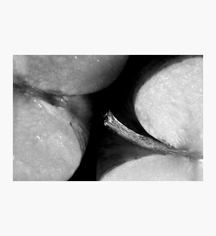 Applethorpe (STRONG SEXUAL METAPHOR) Photographic Print