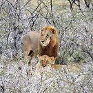 Lion Lust by skaranec1981