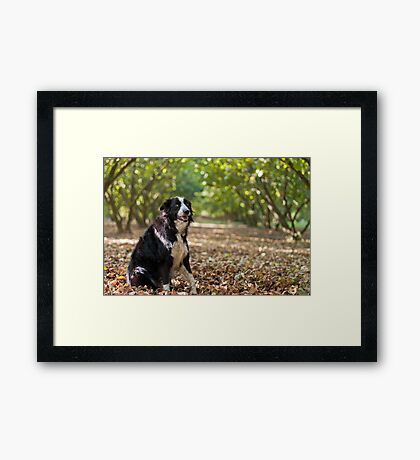 On a bed of leaves Framed Print
