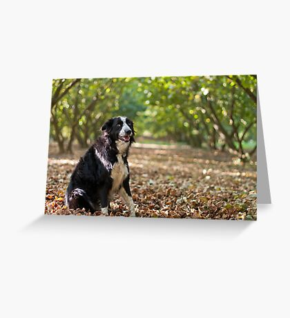 On a bed of leaves Greeting Card