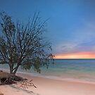 The Seaside Tree - Amity Pt  North Stradbroke Island Qld Australia by Beth  Wode