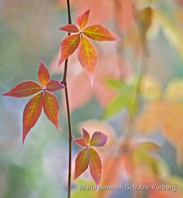 Autumnal kaleidoscope by Maria Ismanah Schulze-Vorberg
