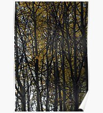 Trees, beautiful trees in autumn Poster