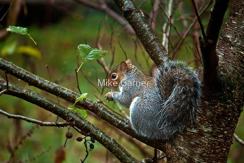 Squirrel by Mike Garner