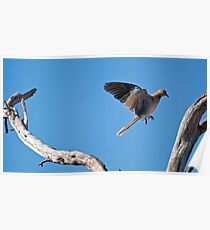leaping dove Poster