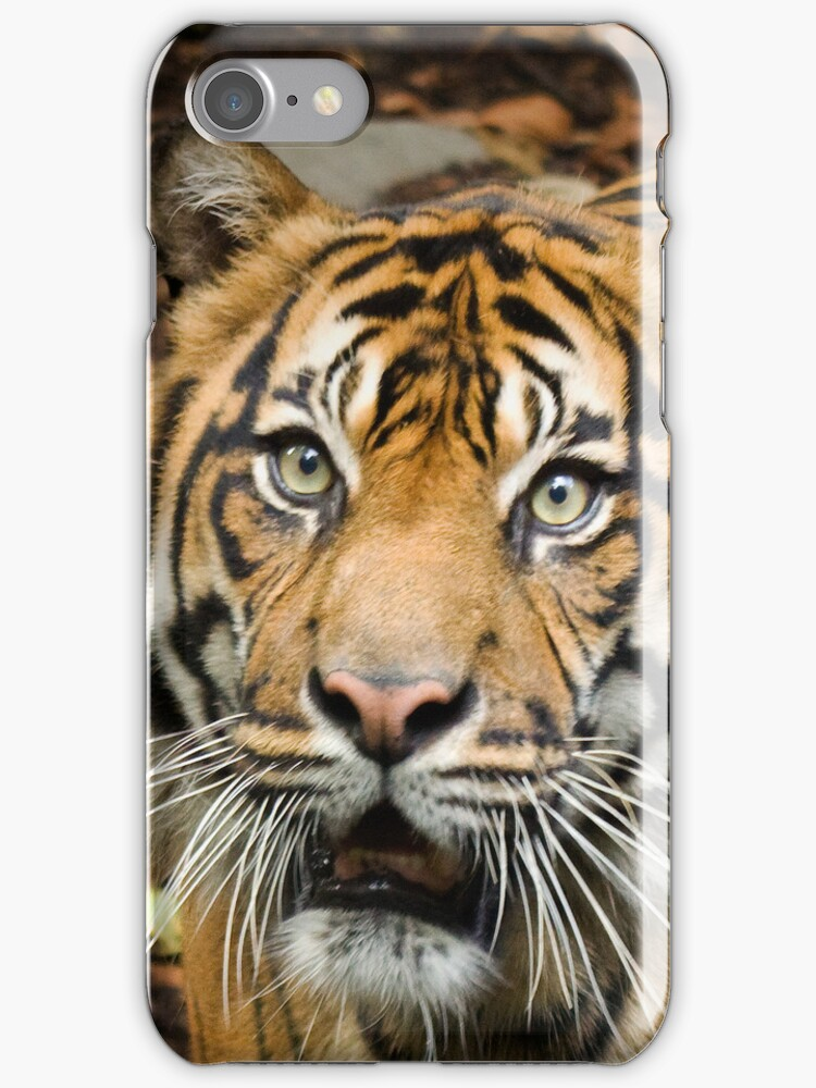 Tiger Tiger iPhone Case by Cecily McCarthy