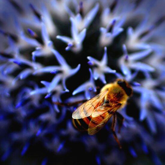 Buzz V by Didi Bingham