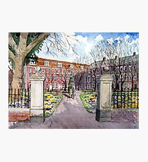 """Crocus Carpet"" - King's Square, Bridgwater, Somerset Photographic Print"