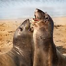 California Elephant Seals by socalgirl