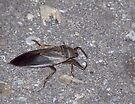 Big Nasty Alien Bug! by Marcia Rubin