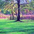 The Long Meadow by Richard Murch