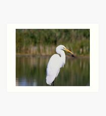 Up Close & Personal With An Egret Art Print
