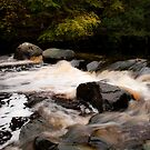 Mystical Waters at Swan Park by Sarah Cowan