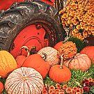 Fall Harvest by Sally Kady