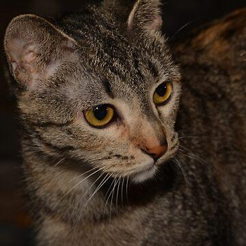 Kitty peek-a-boo by SusanHope