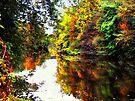 Duck Creek in the Fall  by Marcia Rubin