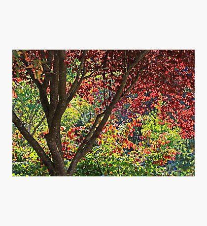 autumn window in Japanese Garden Photographic Print