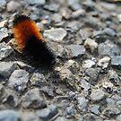 Caterpillar by Jonice