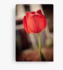 Faded Tulip Canvas Print