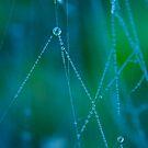 Autumn Web by Sophie Watson