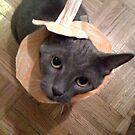 Pumpkin Cat by leystan