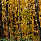Yellow Forest by BigD