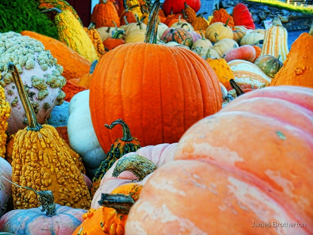 Autumn Harvest by James Brotherton