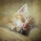 Soft Kitty, Warm Kitty, Little Ball of Fur by vigor