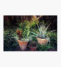 Terra Cotta Trio at Sunset Photographic Print