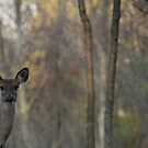 Deer is Proud of his Forest by Thomas Murphy