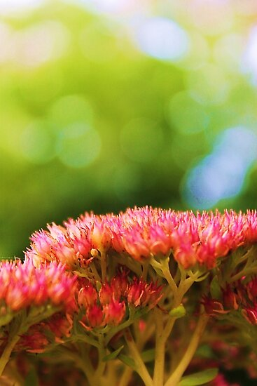 Pink summer flower petals in green background by Adrian Day