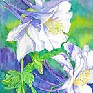 Purple Columbine by clotheslineart