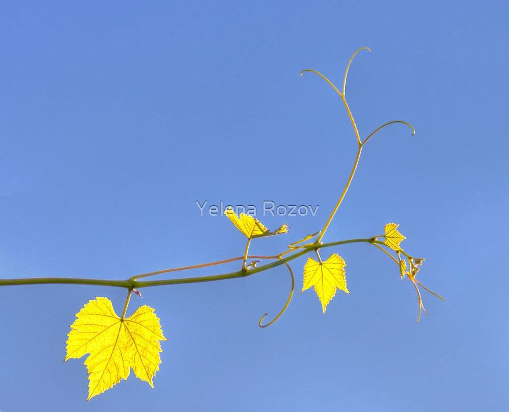 Translucent by Yelena Rozov