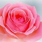 Pink Petals of Life by Sunshinesmile83