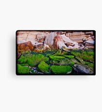 Mossy Rocks at Sunrise Canvas Print