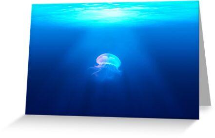 Light in the Sea by dsqrd44