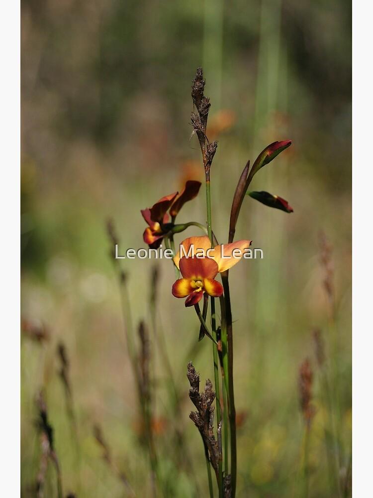 Dunsborough Donkey Orchid by yallmia