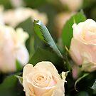 roses  by keki